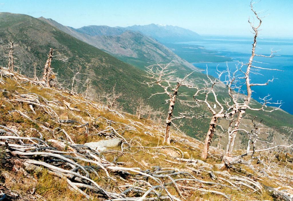 На северо-западном побережье озера сочетания форм тектонического рельефа, иллюстрирующие процесс байкальского орогенеза, отчетливо проявлены на восточном макросклоне Байкальского хребта на участке от мыса Хыр-Хушуун до мыса Елохин. На снимке: северо-западное побережье между мысами Шартлай и Заворотный. На переднем плане - участок старой гари (лиственница и кедровый стланик).