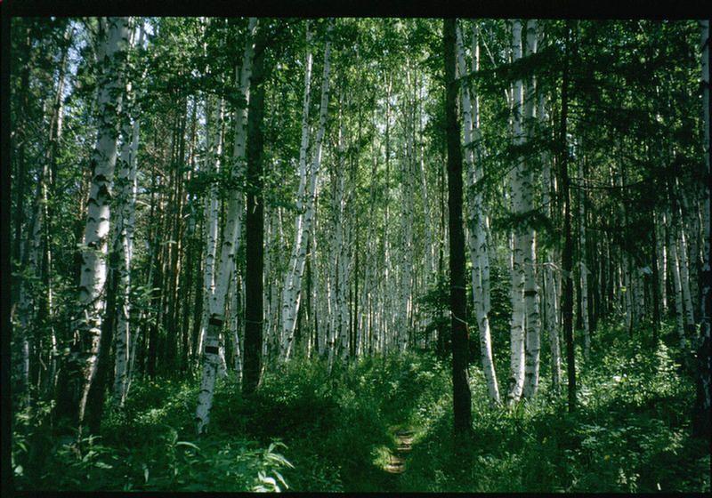 В лесу под Иркутском