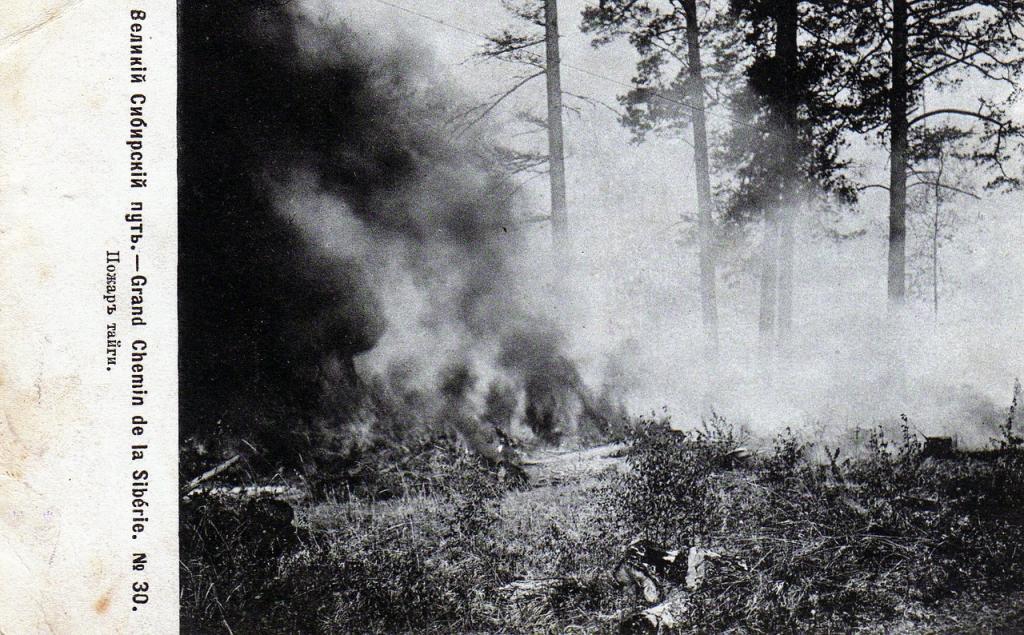 Пожар в тайге