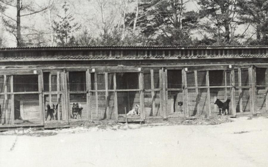 Иркутский питомник лаек в с. Моты. Вольеры с лайками. Фото 1972 года.