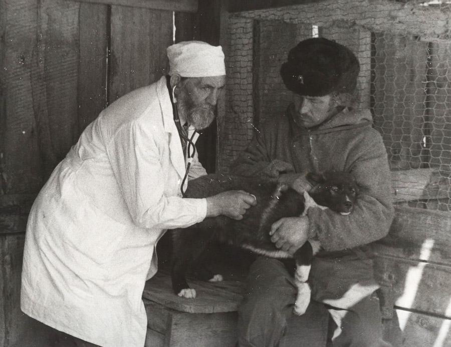 Старший ветврач Александров С.И. и старший егерь Кондратьев А.В. осматривают щенков.