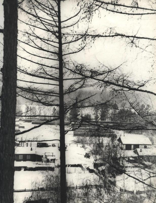 Общий вид питомника лаек в Мотах. 1972 год.