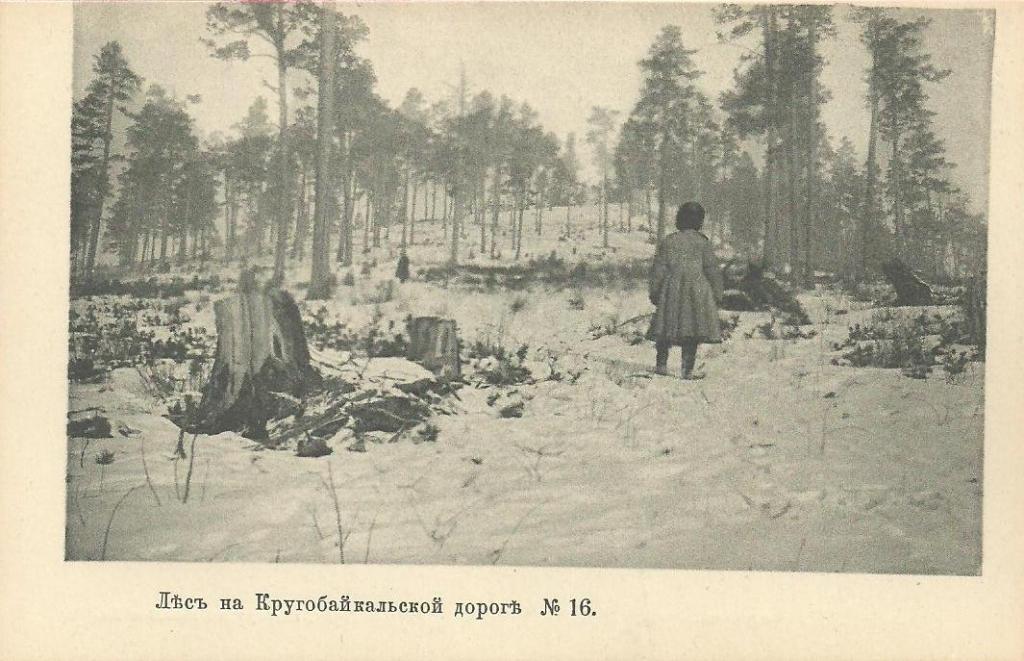 Лес на Кругобайкальской дороге