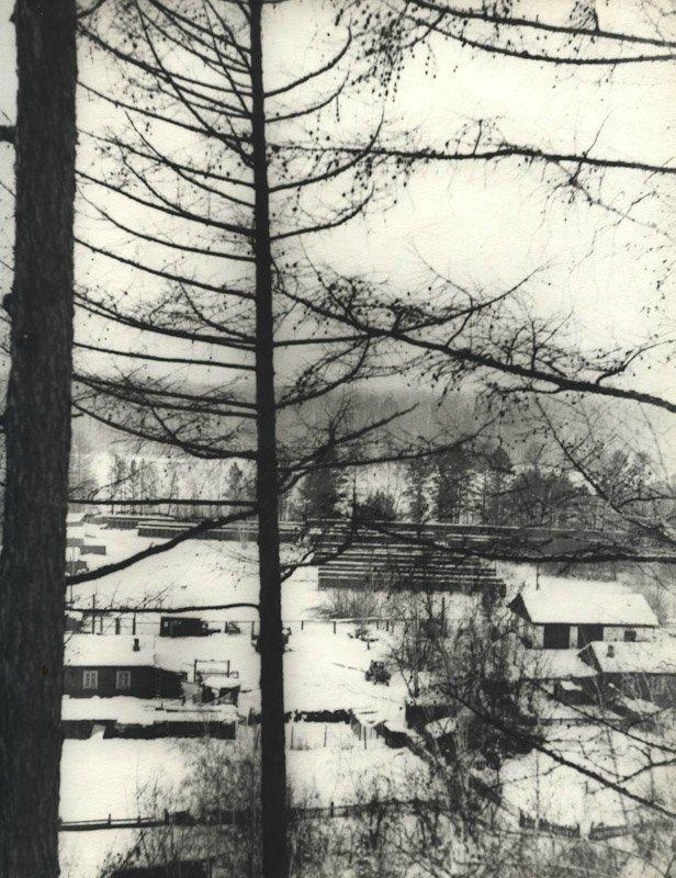 Общий вид питомника лаек в Мотах. 1972 год
