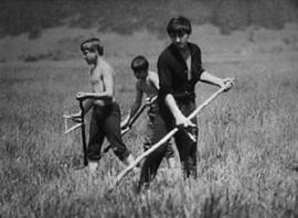 Овечкины жили в Иркутске, но по сути горожанами не были — в своем Рабочем они вели настоящее сельское хозяйство