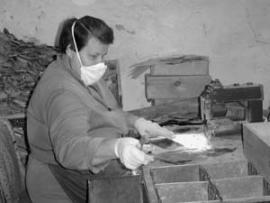 """В цеху слюдообработки рудника Горно-Чуйский сегодня снова заработали обрезные станки. Щепят слюду только женщины. Обрезной станок и столовый нож - все как на заре """"слудного промыслу""""."""