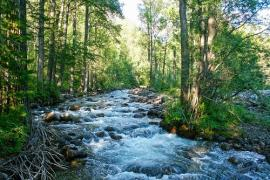Речка Горемыка