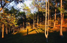 Прибрежный лес. Ольхон