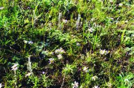 Травы Ольхона