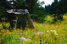 В лесах Восточного Ольхона. М Ухан