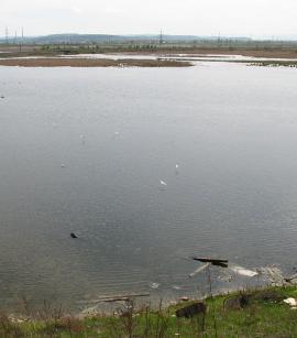 Ново-ленинские болота