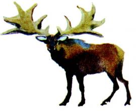Гигантский олень, обитавший в прибайкалье тысячи лет назад
