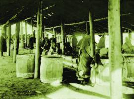 Рыбодел Кузьмина на Онкогонской бухте в Кургулике. 1905 г. ИОКМ ф13683-29