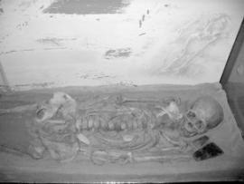 В Иркутском краеведческом музее хранятся копии останков подростка, найденные на месте палеолитической стоянки в районе Мальты.