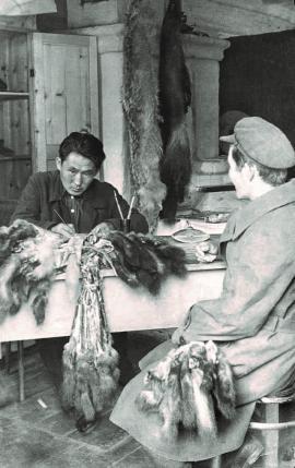 Заготовка пушнины в Тофаларии