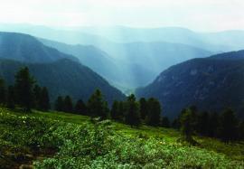 Кедрачи на склонах Хамар-Дабана