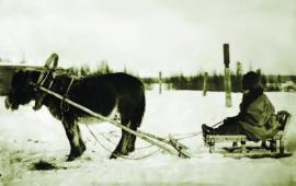 Якутская лошадь зимой ИОКМ ф470-24