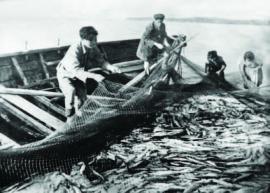 Подбор матни невода с добытой рыбой ИОКМ ф433-52