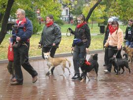 В центре Иркутска прошел парад кошек и собак
