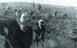 Иркутяне на общественных работах по уборке картофеля