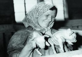 Возрождалось животноводство
