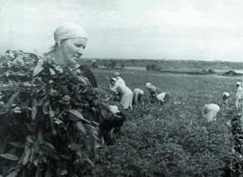 Иркутяне на общественных работах по уборке урожая