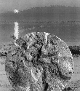 Керн с отпечатком древнего папоротника, поднятый из толщи донных отложений