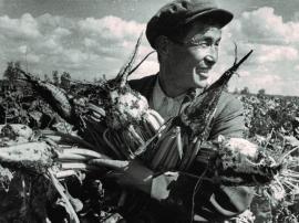 С. Пашенков, свекловод Аларского совхоза. Отделение т. Пашенкова вырастило урожай сахарной свеклы более 400 ц/га