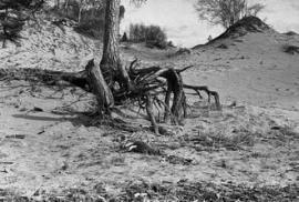 Рис. 3.32. Характерные эоловые формы рельефа в береговой полосе оз. Байкал, представленные песчаными буграми и котловинами выдувания (устье р. Безымянной, восточное побережье).