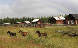 Самым надежным транспортным средством здесь считается лошадь