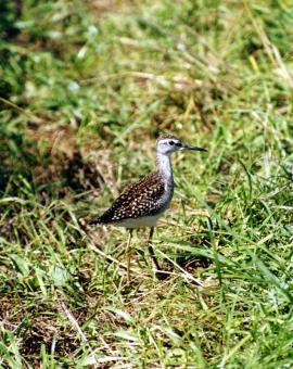 Фифи - молодая птица