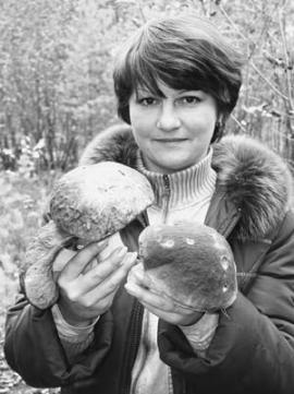 Мамский край славится грибами и черникой. Увы, это не заслуга властей