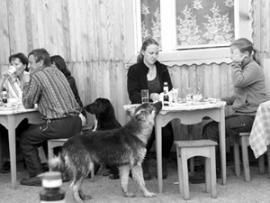 Собаки на острове повсюду