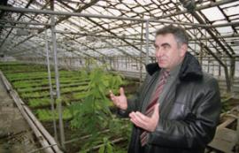 Бывший начальник УВД Братска теперь выращивает огурцы