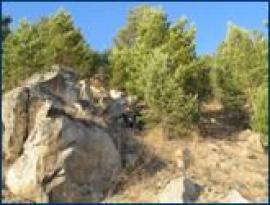 Фофоновская гора