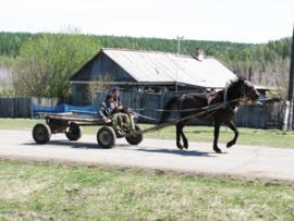 Маршрутки и автобусы в деревне не ходят. Из-за местного бездорожья лошади до сих пор лучший транспорт