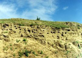 Колония береговых ласточек