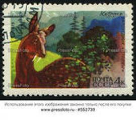 Почтовая марка СССР с изображением кабарги