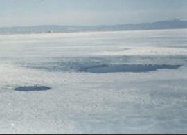 К пропаринам во льду Байкала, образующимся в местах выходов газа, никогда не подходит рыба