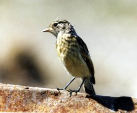 Молодая птица на окраине Иркутска