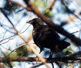 Молодая птица у гнезда
