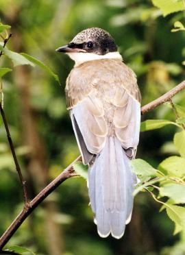 Молодая птица ждёт родителей