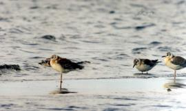 Молодые птицы в дельте р. Селенги