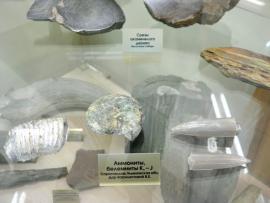 Аммониты - окаменевшие древние маллюски